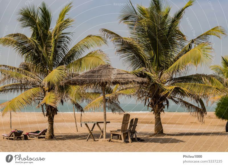 Two chairs and coffee table under a palm Beautiful Relaxation Vacation & Travel Tourism Summer Beach Ocean Chair Table Financial institution Sand Sky Clouds