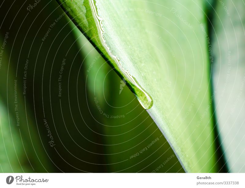 drop of dew on a green leaf of a plant close up Summer Garden Environment Nature Plant Climate Leaf Drop Fresh Bright Wet Natural Soft Green Colour backdrop
