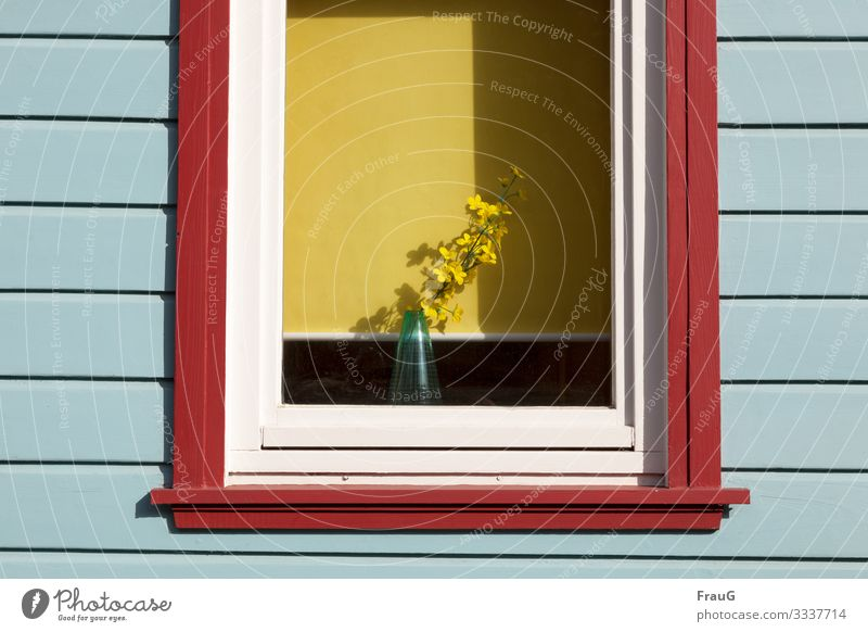 Spring in the window Living or residing Decoration Flower Blossom Facade Window Vase Roller blind Wood Multicoloured Yellow Spring fever Shadow Colour photo