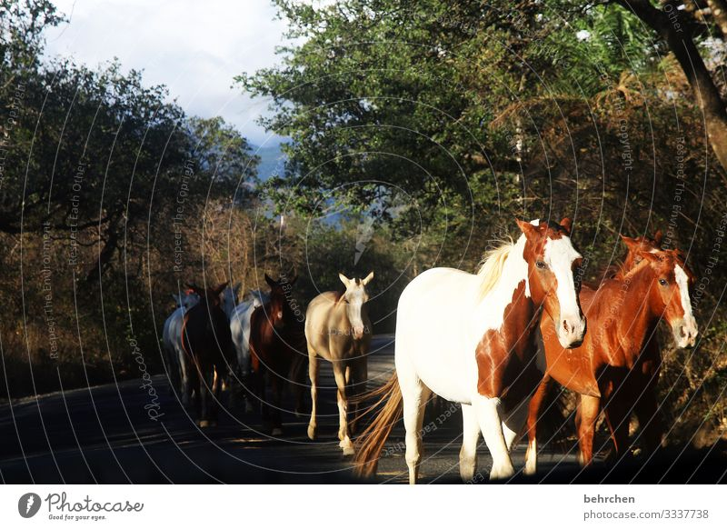 the luck of the earth lies on the back of the horse Fantastic Love of animals Pelt Environment Nature Trip Tourism Vacation & Travel Impressive Adventure