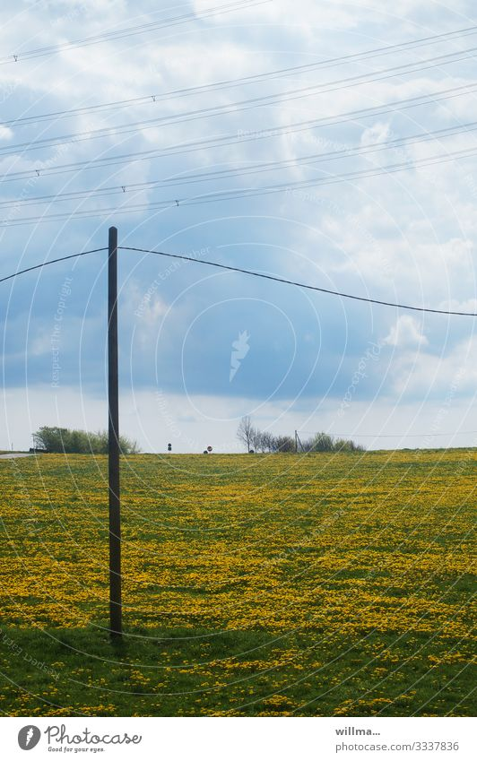 Dandelion meadow and telegraph pole Telegraph pole High voltage power line Clouds Spring Summer Beautiful weather dandelion meadow Meadow Nature