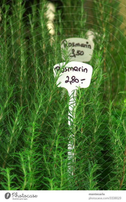 rosemary Herbs and spices Nutrition Vegetarian diet Plant Foliage plant Agricultural crop Wild plant Pot plant Rosemary Thin Fresh Tall Point Soft Green