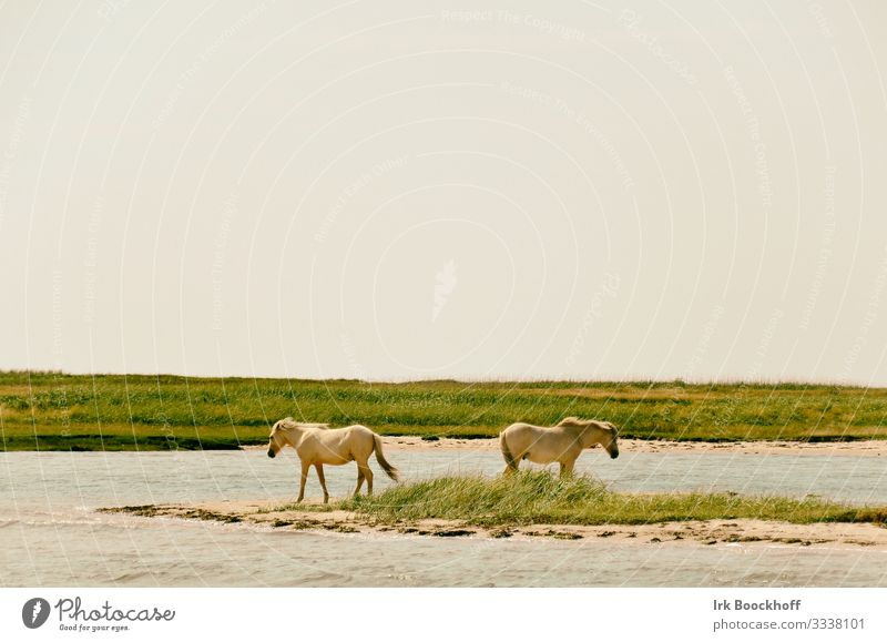 2 white horses are standing close to the water, turned away from each other Vacation & Travel Tourism Trip Summer Beach Ocean Nature Landscape Water Sky