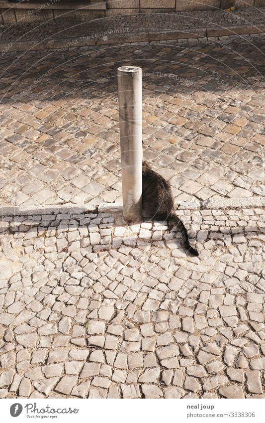 cats made tail Old town Street Cobblestones Bollard Pet Cat 1 Animal Stone Looking Sit Astute Funny Crazy Joy Curiosity Uniqueness Expectation Whimsical