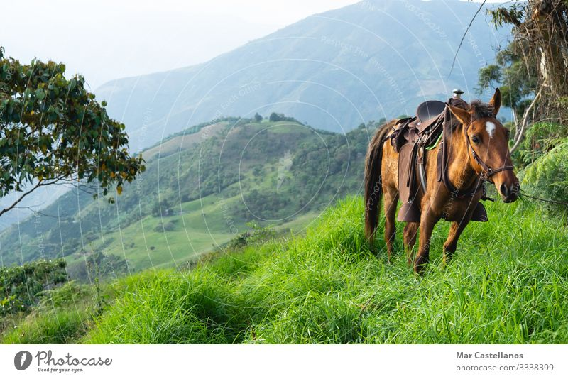 Mule with saddle grazing in natural mountain meadows. Lifestyle Ride Freedom Sightseeing Mountain Hiking Work and employment Agriculture Forestry Animal