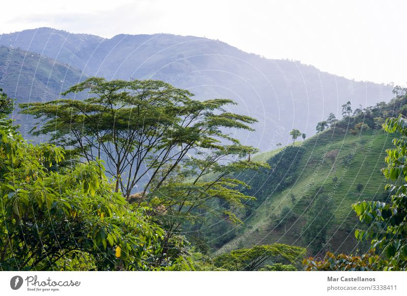 Colombian mountain landscape. Coffee-growing area. Antioquia. Calm Vacation & Travel Tourism Freedom Sightseeing Summer Summer vacation Mountain Nature