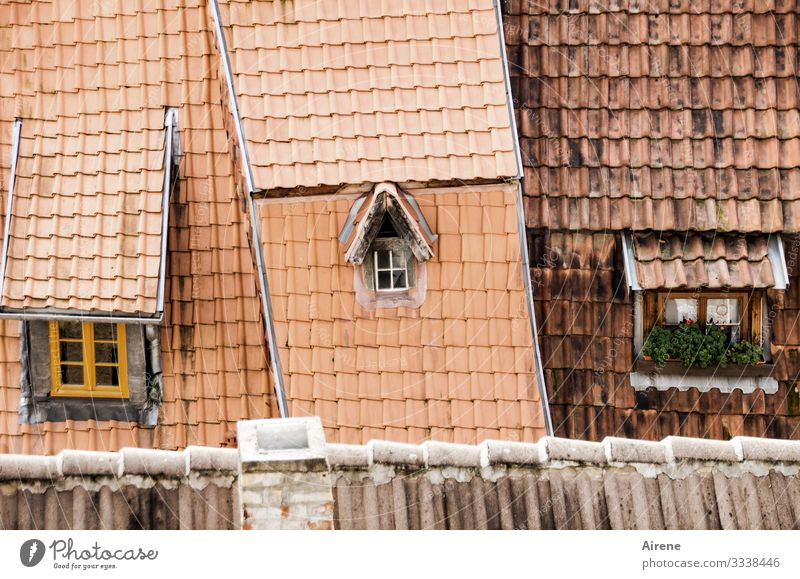 little outlook, little insight Roof Day Gable Tradition Authentic Historic Retro Cozy Old Franconian Pitch of the roof Roofing tile Brick red Tiled roof