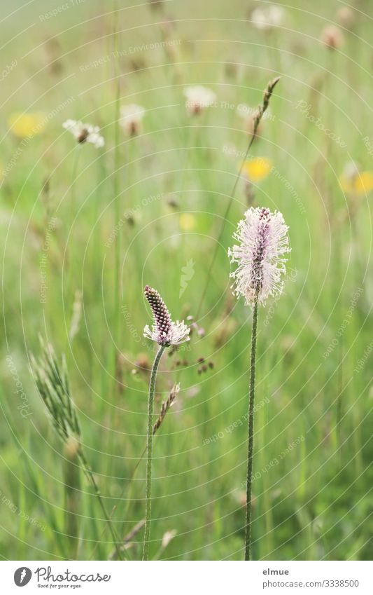 Ecological meadow Nature Plant Summer Beautiful weather Grass Blossom Wild plant Meadow Blossoming Green Happy Contentment Spring fever Romance Longing
