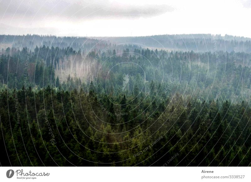 Climate change   bare patches in the Harz Mountains Panorama (View) Long shot Day Deserted Exterior shot Subdued colour Colour photo Grief Loneliness Gloomy