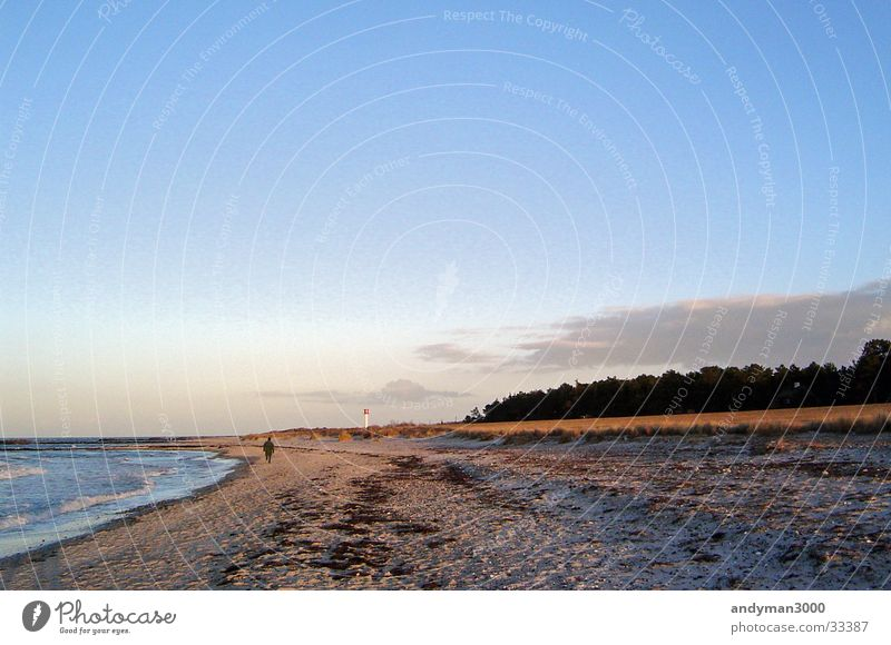 Winter day at the Baltic Sea Forest Beach Loneliness Ocean Sky Clarity Evening Sand
