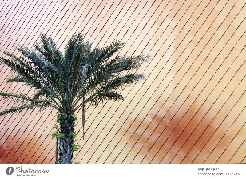 palm Vacation & Travel Tourism Plant Tree Leaf Foliage plant Palm tree Park Wall (barrier) Wall (building) Facade Line Orange Colour photo Close-up Deserted Day