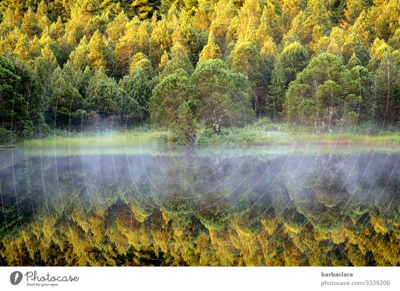 veil of mist Fog Shroud of fog trees Black Forest Autumn Autumnal reflection Deciduous forest Deciduous tree Water Lake Water reflection Surface of water Nature