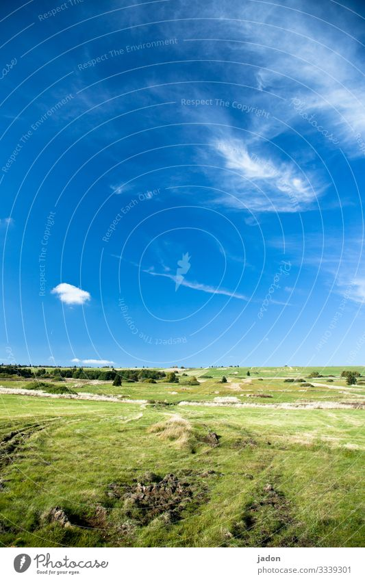 green land, blue sky, white clouds, wonderful. Landscape Tree Nature Autumn Exterior shot Colour photo Environment Deserted Day Natural Sky Field Grass