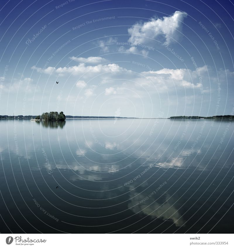 Sky Nature Plant Blue Water Tree Landscape Clouds Animal Far-off places Environment Spring Freedom Flying Lake Bird