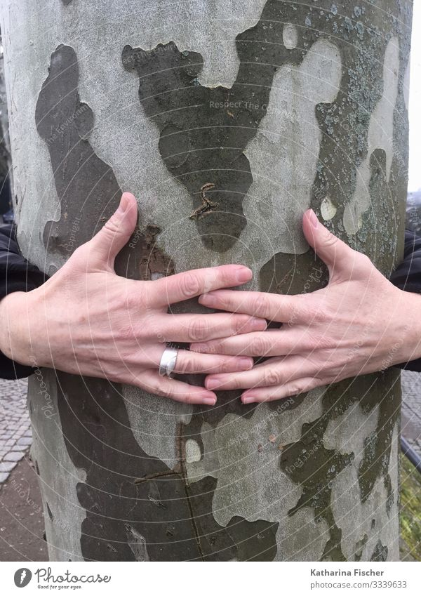 Hands tree trunk Fingers Nature Spring Summer Autumn Winter Climate Tree Gray Green Silver White Tree trunk To hold on Embrace Love of nature Encompass