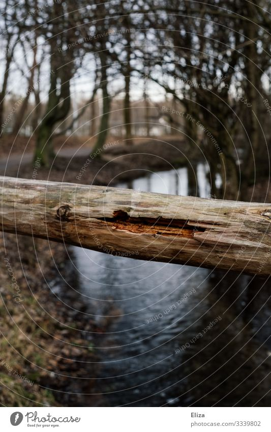 trunk Brook River Nature Wood Tree trunk Brittle Barrier Handrail Colour photo Exterior shot Deserted Copy Space bottom Day