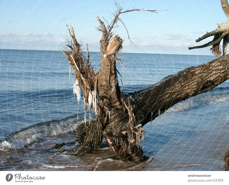 Winter at the Baltic Sea Vacation & Travel Ocean Water Beautiful weather Ice Frost Tree Cold Blue Brown Calm Nature Tree trunk Icicle Branch Colour photo