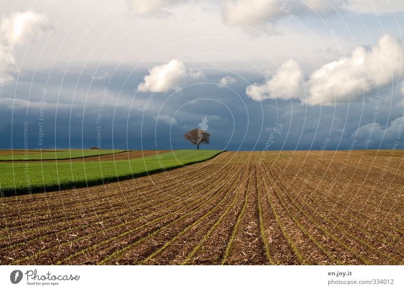 solitary Environment Nature Landscape Plant Elements Earth Sky Clouds Storm clouds Bad weather Gale Thunder and lightning Tree Agricultural crop Field Threat