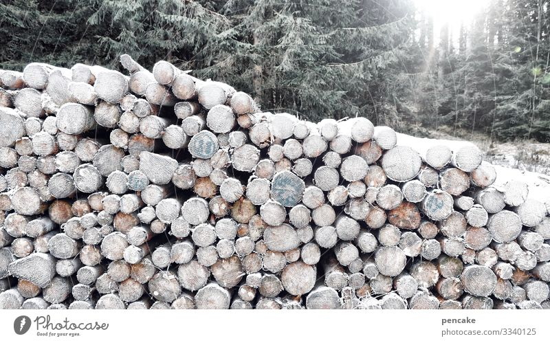 ice time | frozen goods Nature Landscape Sun Sunrise Sunset Sunlight Winter Ice Frost Forest Cold Sustainability Tree trunk Stack Hoar frost Cut down Heat Wood