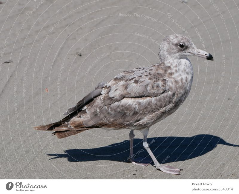 seagull Bird Sky Flying Grand piano Black-headed gull Beach Beak