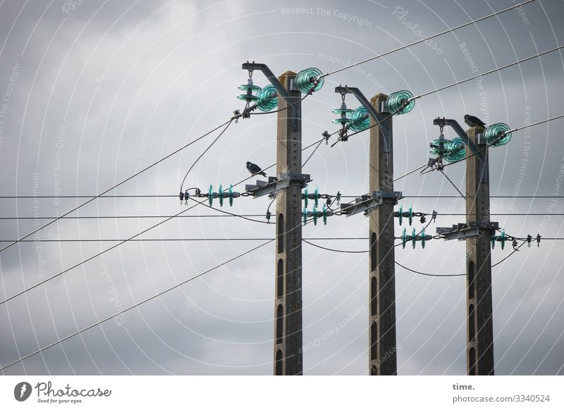 Cable companies #32 Technology Energy industry Electricity pylon High voltage power line Insulator Sky Clouds Storm clouds Bird Pigeon 1 Animal Stone Metal