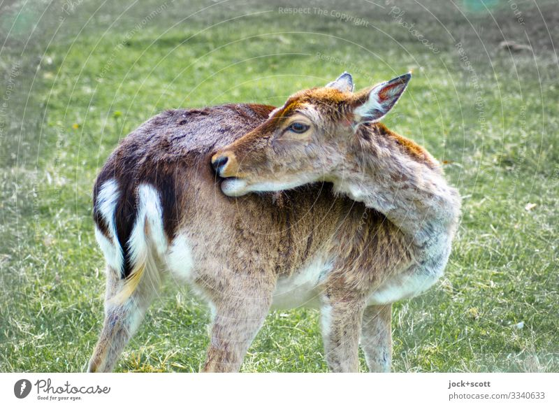 Wildlife of the last year Beautiful weather Meadow Franconia Wild animal Animal face Roe deer 1 Touch Stand Authentic Healthy Natural Warmth Brown Green