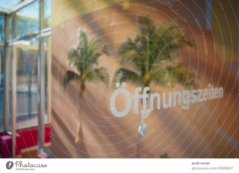 Closing of the Shop lost places Lichtenberg Store premises Door Decoration Palm tree Label Pane Photo wallpaper Characters Exotic Free Uniqueness Retro Warmth