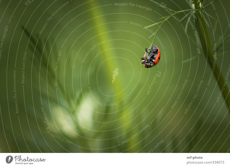 What am I gonna do? Nature Plant Animal Spring Ladybird Hang To swing Green Red Colour photo Exterior shot Deserted Animal portrait