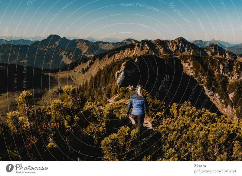 Hiking on the Brecherspitz | Bavaria crusher tip mountain Alps Peak Forest panorama Going Athletic Sports shrubby warm Autumn Green Brown Woman Blue sky Lonely