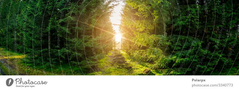 Green forest panorama scenery with sunlight Beautiful Summer Sun Environment Nature Landscape Plant Tree Grass Moss Leaf Park Forest Lanes & trails Natural Wild