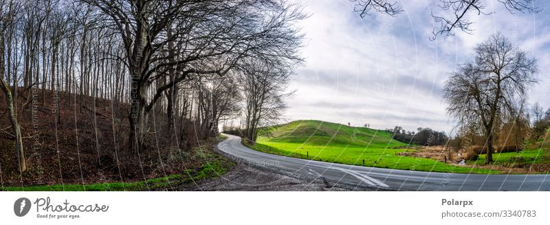 Curvy road in a forest panorama scene Beautiful Vacation & Travel Summer Mountain Nature Landscape Sky Autumn Tree Grass Leaf Park Meadow Forest Hill Street