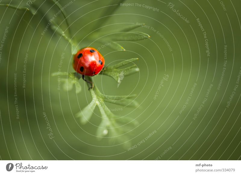 Let's get out of here... Plant Animal Ladybird Green Red Colour photo Exterior shot Macro (Extreme close-up)