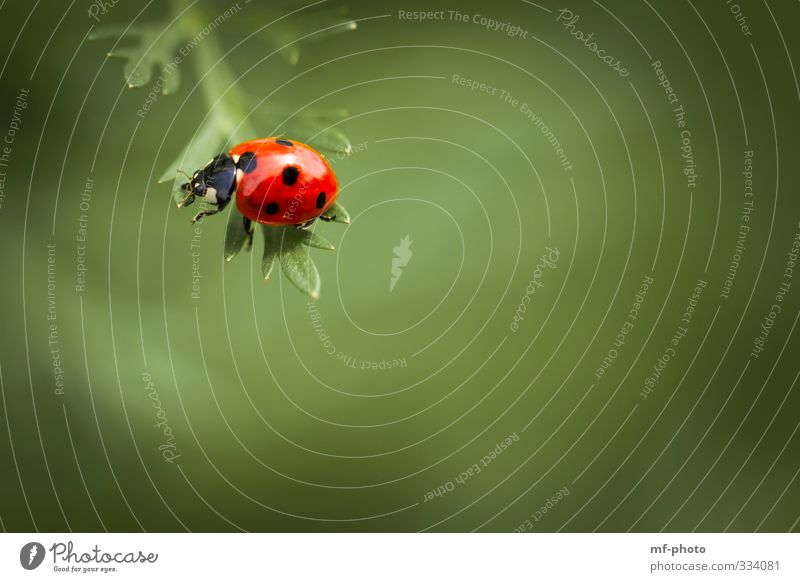 balance Nature Spring Ladybird Green Red Colour photo Macro (Extreme close-up)