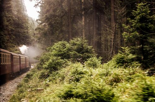 the train is running again Trip Mountain Train travel Steamlocomotive Movement Brown Green White Historic Forest Harz Bushes Undergrowth Railroad tracks Joy