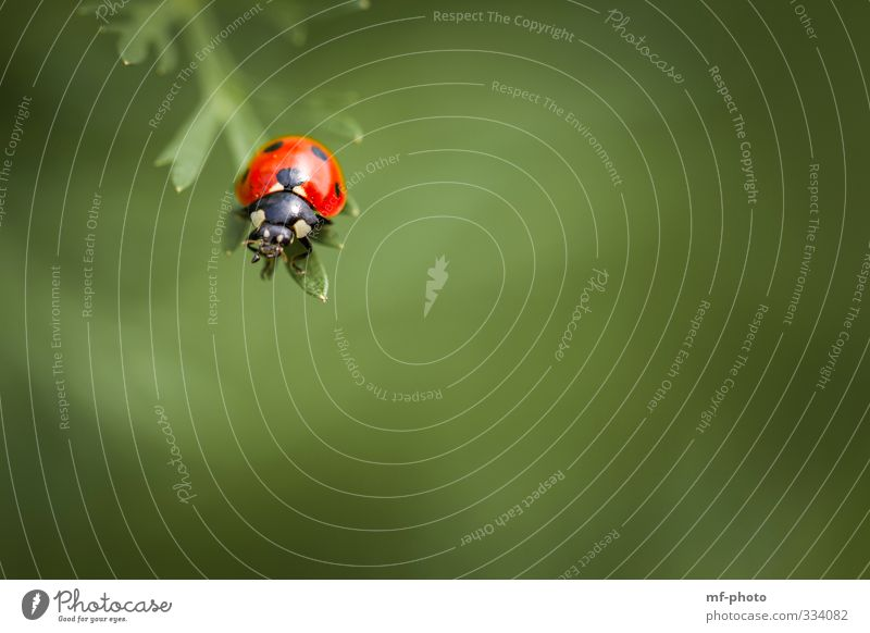 Nature Green Plant Red Animal Spring Happy Flying Beetle Ladybird