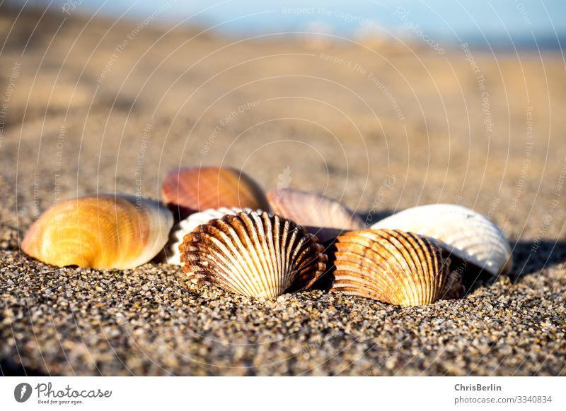 Mussels in the evening light Summer Beach Ocean Nature Landscape Sand Coast Maritime Calm Esthetic Relaxation Dusk Multicoloured Exterior shot Close-up Deserted