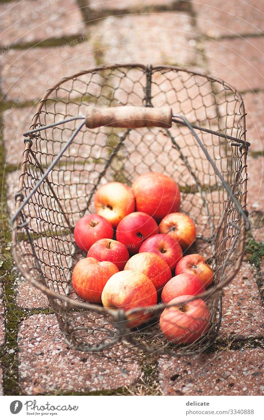 apple harvest Fruit Garden Autumn late summer Fruit garden fruit Fruit trees fruit harvest Harvest Mature Delicious Food Organic produce Nature Colour photo