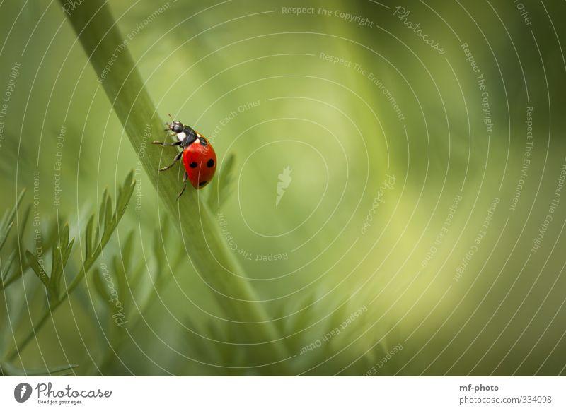 Nature Green Plant Red Animal Spring Happy Walking Crawl Ladybird