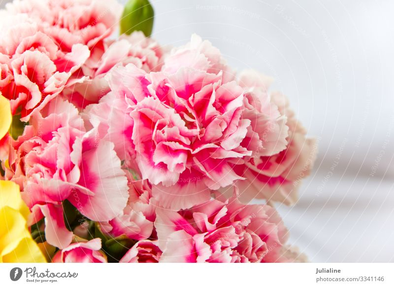 Red carnations Summer Nature Plant Flower Blossom Bouquet Dianthus caryophyllus spring nosegay Colour photo Multicoloured