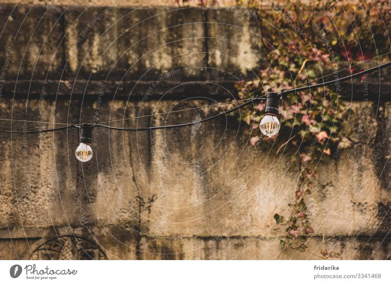 Lights on Tourism Trip Feasts & Celebrations Ruin Wall (barrier) Wall (building) Facade Stone Ornament Dirty Brown Ivy Fairy lights Colour photo Exterior shot