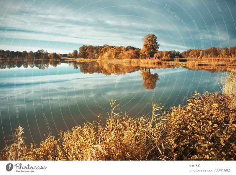 haven of peace Environment Nature Landscape Plant Air Water Sky Cloudless sky Horizon Autumn Beautiful weather Tree Bushes Lakeside Pond Street Truck Calm Idyll