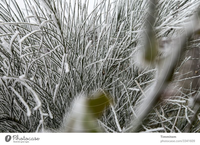 Ice Age | blades Environment Nature Plant Water Winter Frost Brook Swabia Cold Natural Green White Emotions Ice age Bachrand Colour photo Exterior shot Deserted