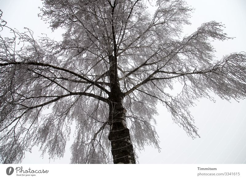 Sky Plant Tree Clouds Winter Black Environment Cold Natural Gray Park Ice Esthetic Frost Franconia