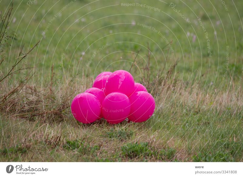 pink colored balloons in a meadow Nature Decoration Balloon Pink celebration Meadow landscape copy space gas balloon helium balloon nobody Party Colour photo