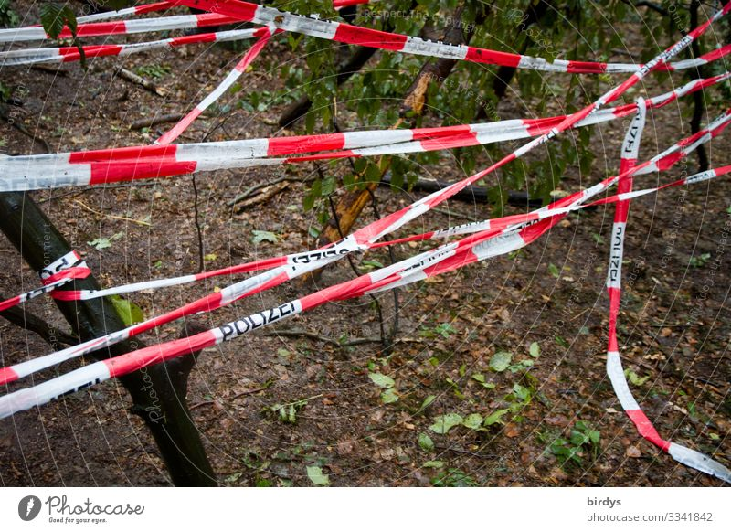 crime scene Climate change Forest Plastic ribbon Sign Characters Barrier Police Barrier Tape Police Force Authentic Red White Might Safety Protection Discordant