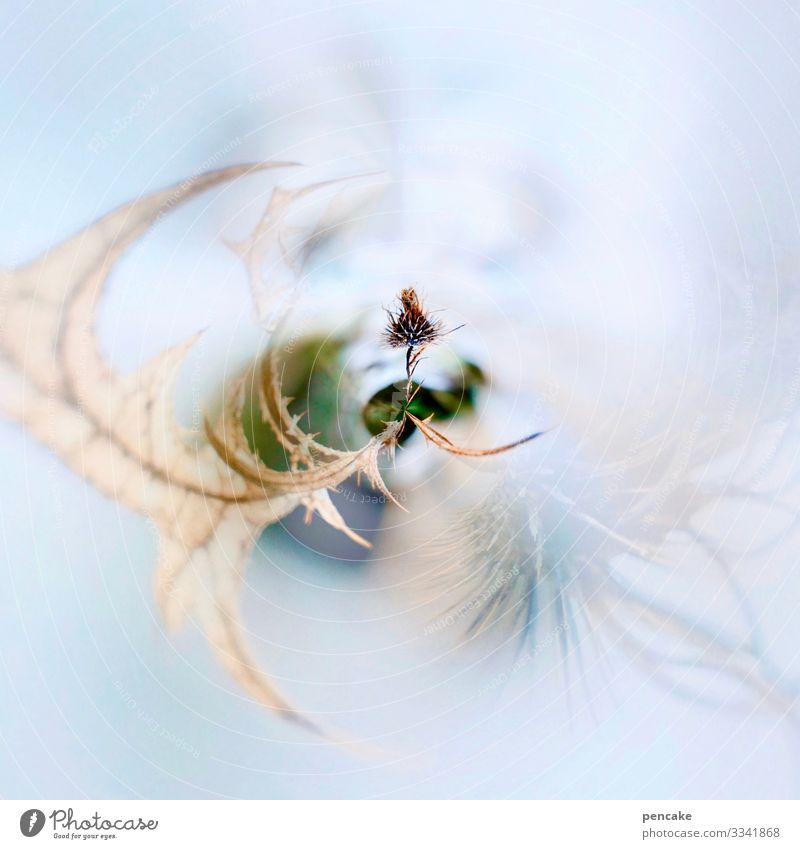 Nature Plant Leaf Winter Snow Ice Power Wait Mysterious Frost Seed Rotate Puzzle Thorny Faded Survive