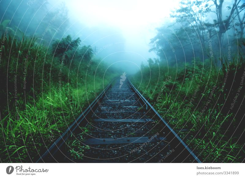 melancholy Vacation & Travel Tourism Adventure Sightseeing Nature Fog Rain Plant Virgin forest Rail transport Train travel Railroad tracks Sadness Hiking Cry