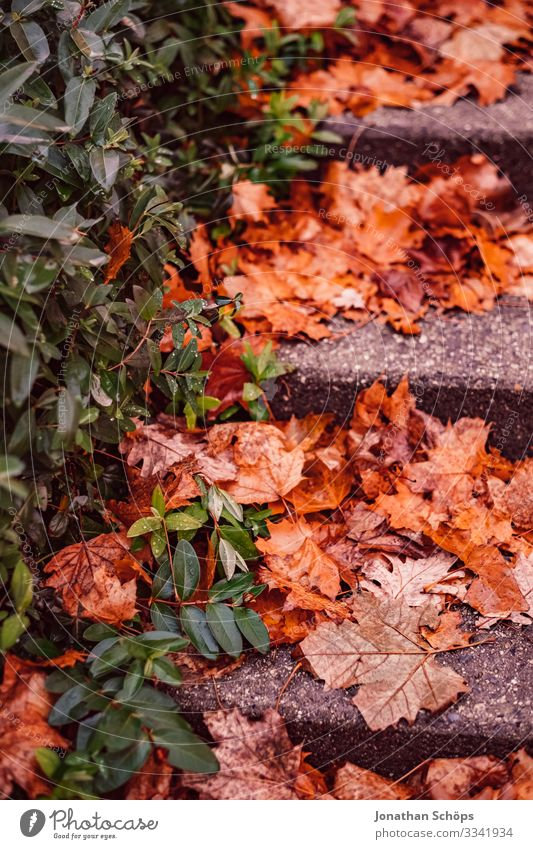 Autumn leaves on a slippery staircase Evening sun Twilight colourfulness Warm light evening sunlight Background picture transient Transience change of seasons