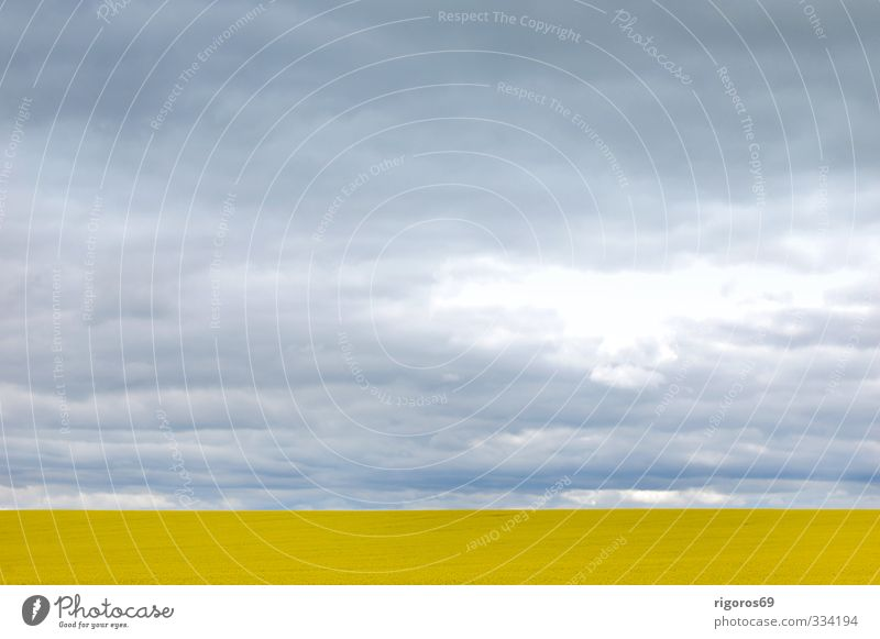 Sky Blue Landscape Clouds Yellow Spring Gray Field Illuminate Growth Earth Wind Blossoming Threat Bizarre Senses