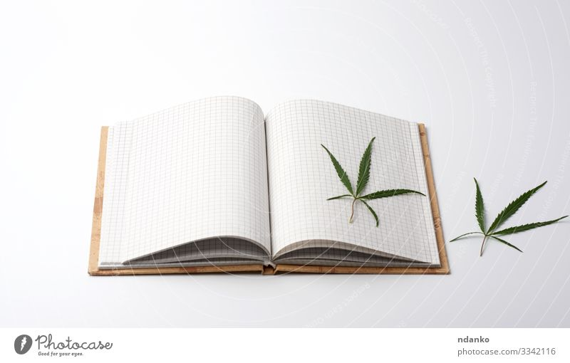 blank white sheets and green hemp leaf Herbs and spices Medication Culture Plant Grass Leaf Paper Green White habit hash hashish herbal Illegal abuse addictive
